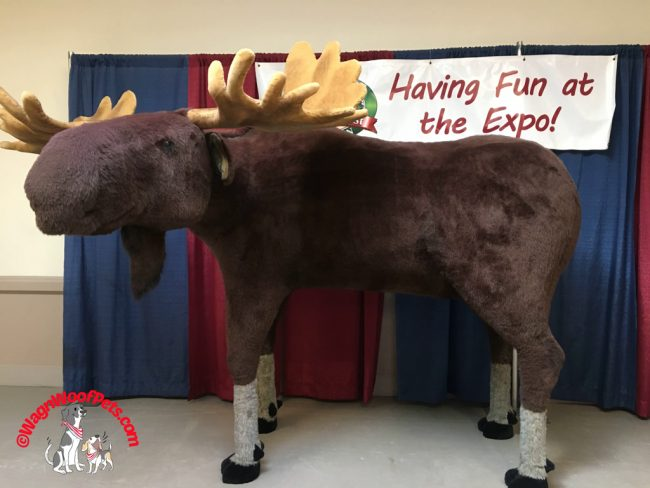 Moose Having Fun at the Expo!