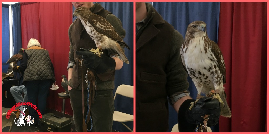 Farm & Forest Expo - Falcons