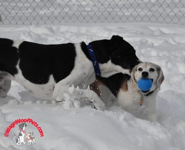 Fun Photos Friday - Beagles Rule!