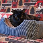 2-in-1 Cat Cube & Bed from Smiling Paws Pets Review