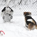 Snow Dive – Wordless Wednesday