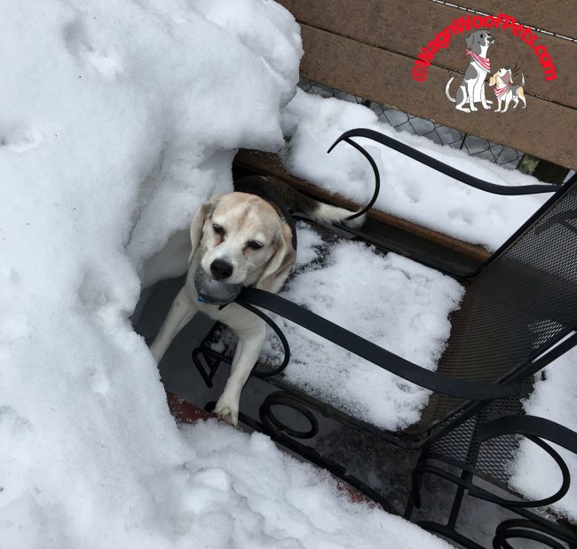 Does This Beagle Need Help?