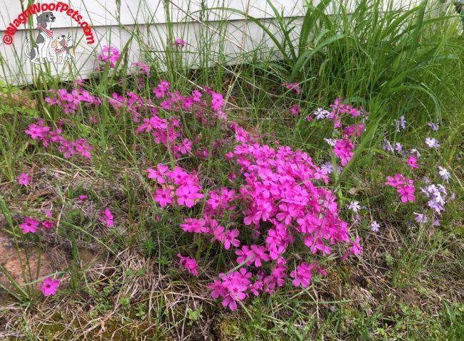 A Faraway Dream - Flower Friday