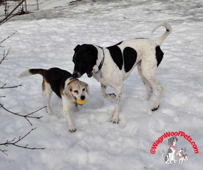 Canine Siblings Having Fun