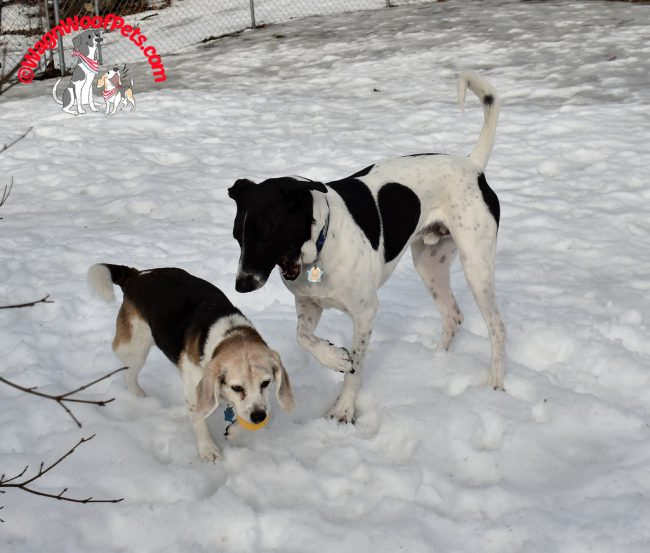Canine Siblings Playing