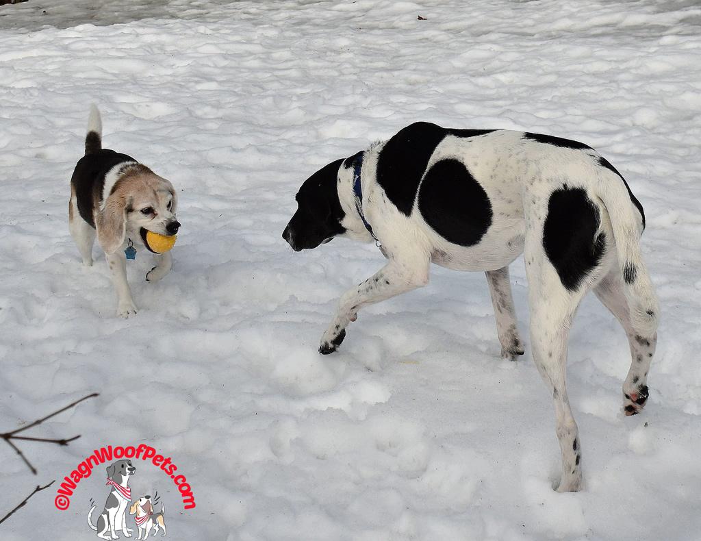 Canine Siblings Bluster