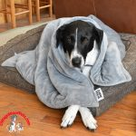 Canine Coddler Anxiety Blanket Review