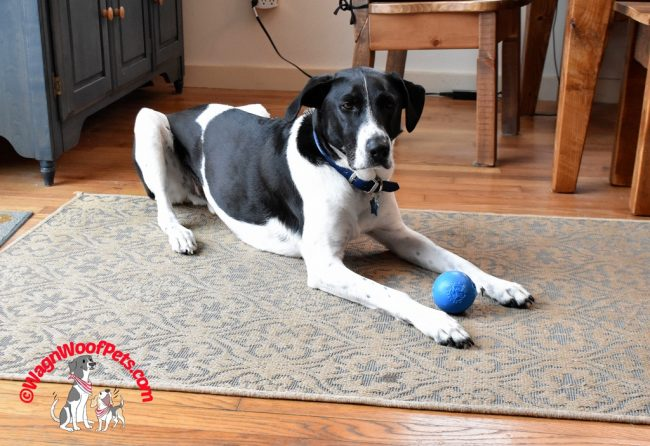 Throw Rugs Make Great Mats for a Dog's Toy Time
