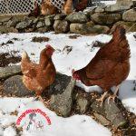 "Favorite Farm Photos Friday – ""Tracks"""
