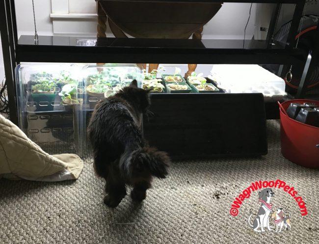 Throwback Thursday - Cat Mischief