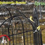 "Appreciate the Moments Photo Challenge – ""Spring"""