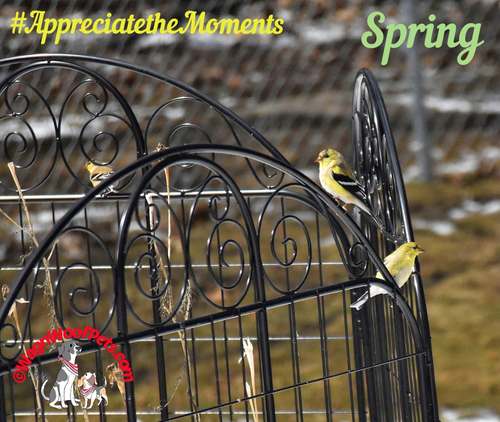 "Appreciate the Moments Photo Challenge - ""Spring"""