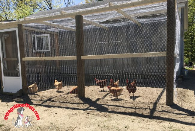 The New Chicken Run