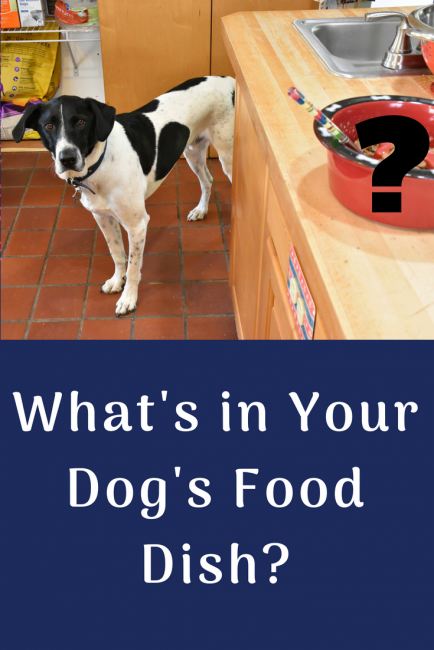 What's in Your Dog's Food Dish?