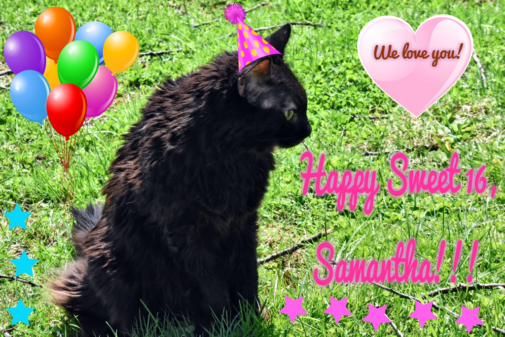 Happy Sweet 16 to Our Cat Samantha