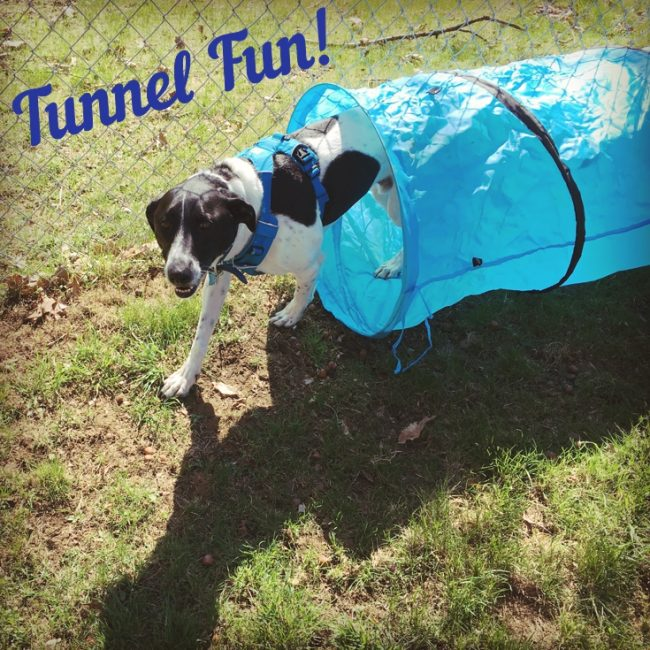 Luke Makes His Own Tunnel Fun!