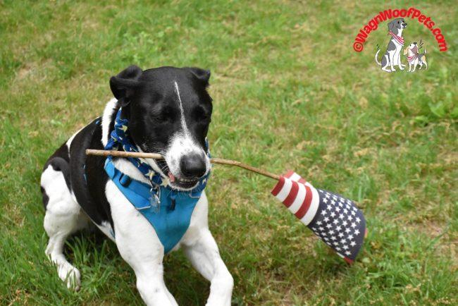 A Patriotic Dog?