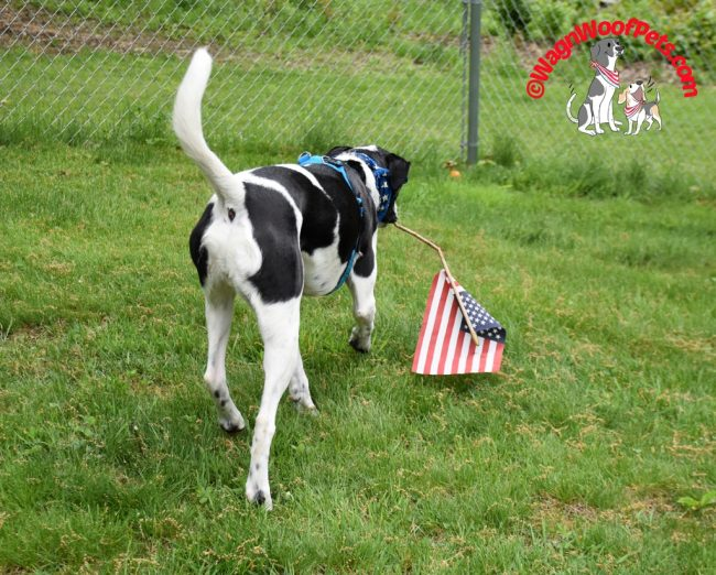 The Memorial Day Parade that Wasn't - #PetPhotoFails