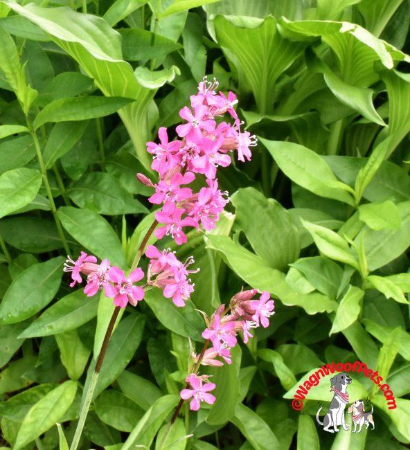 Mystery Pink Flower