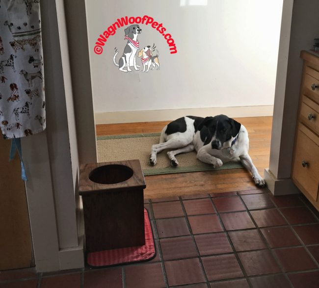 Our Dog Luke Waits Patiently for His Meals