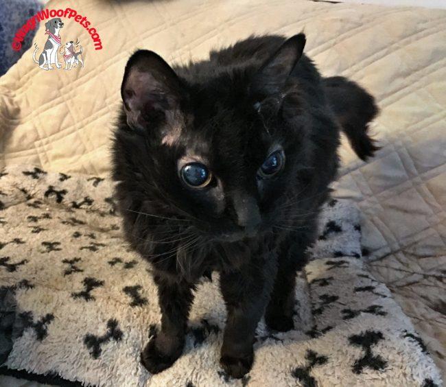Black Cat Samantha