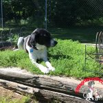 Bed Thyme for Farm Dog Luke
