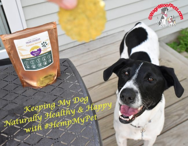 Keeping My Dog Naturally Healthy & Happy with HempMy Pet