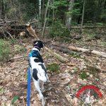 Positive Pet Training – Loose Leash Walking