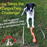 Luke Takes the #WestPawUS #ZwigvsTwig Challenge!