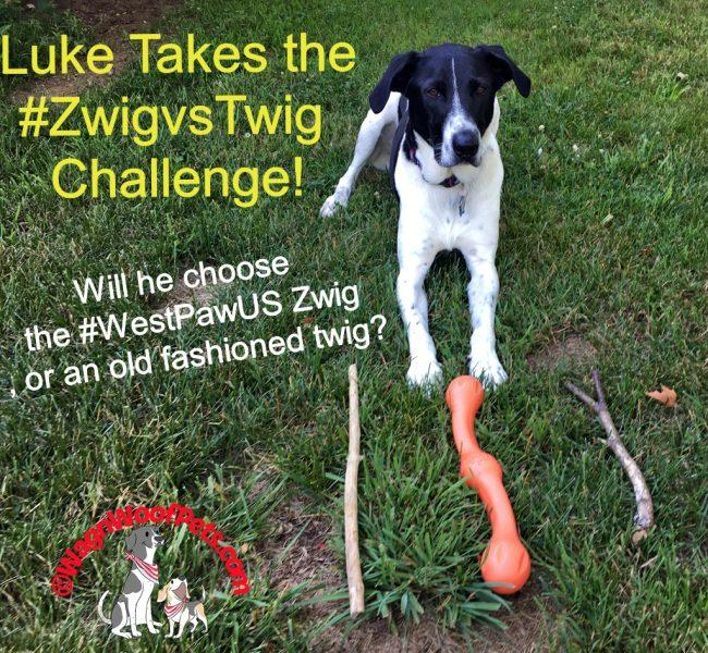 Luke Takes the #ZwigvsTwig Challenge. #WestPawUS #DogsBestFriend
