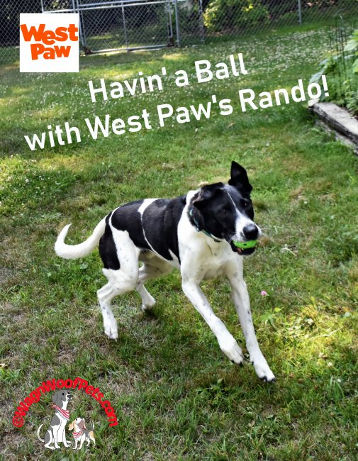 Havin' a Ball with West Paw's Rando