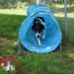Dog Sports – For Competition or Just for Fun & Enrichment