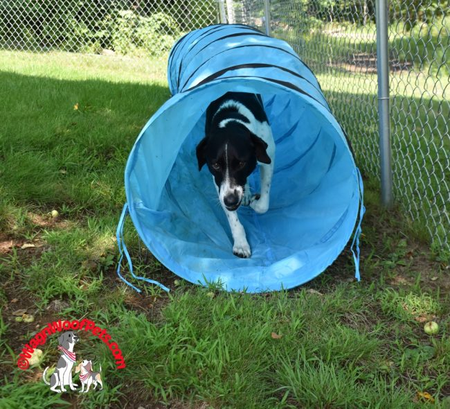 Dog Sports - For Competition or Just for Fun & Enrichment