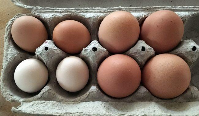 Pullet VS Chicken Eggs