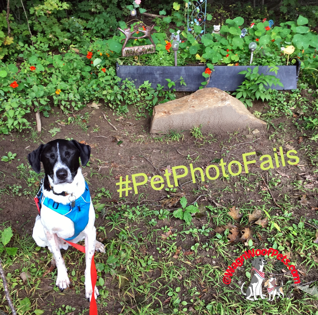 Dogs Close Their Eyes for Photos Too #PetPhotoFails