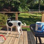 Farm Updates – Late Summer