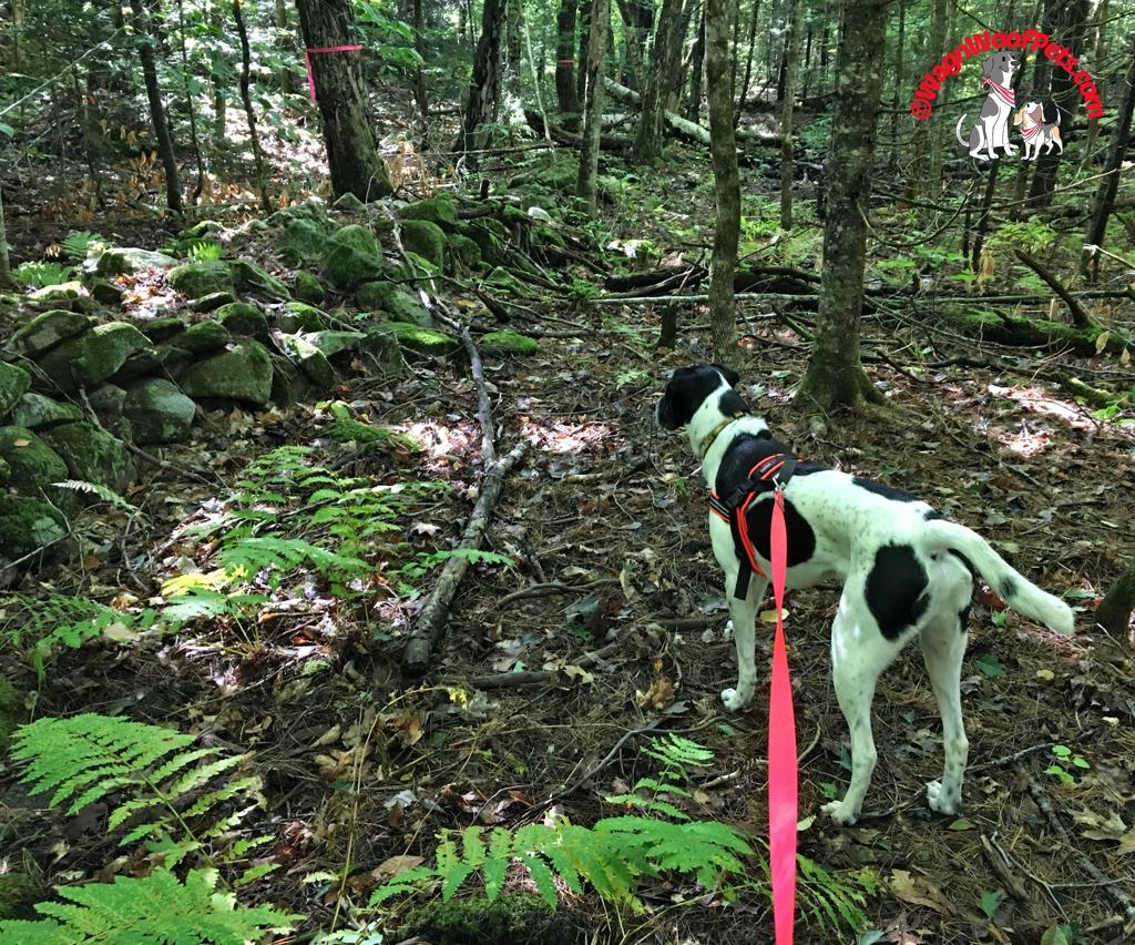 Positive Pet Training Blog Hop - Exercise & Training