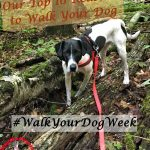 #WalkYourDogWeek Our Top 10 Reasons to Walk Your Dog
