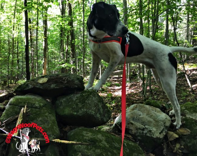 Walk Your Dog for Exercise & Fitness