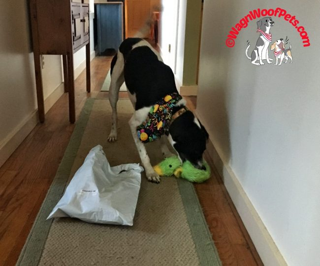 Monday Fun Day - Birthday Toys!