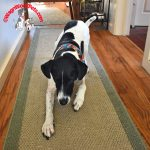 Teach Your Dog to Crawl – Trick or Treat Giveaway Hop!