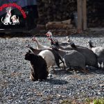 Wordless Wednesday – Leader of the Pack