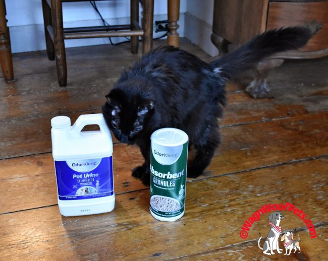 Senior Cat Samantha Shows OdorKlenz Products for Review
