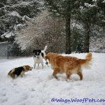 Dogs in the Snow 2015