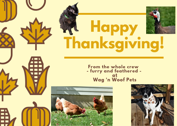 Happy Thanksgiving from the Wag 'n Woof Pets Crew