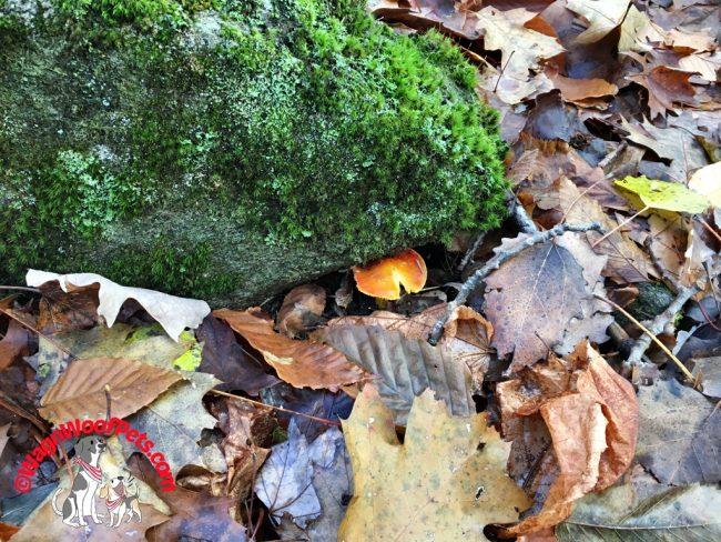 Mother Nature's Hidden Treasures