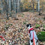 Nature Friday – Changing Seasons