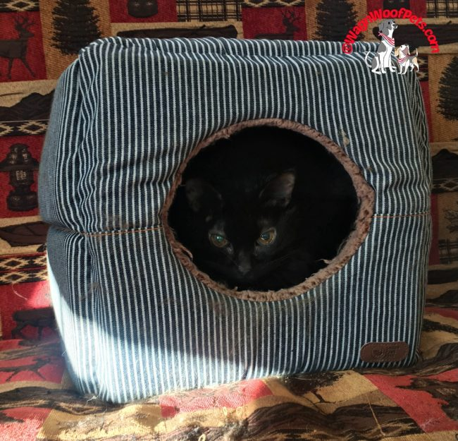 Smiling Paws Pet Cube - Gift Guide 2018