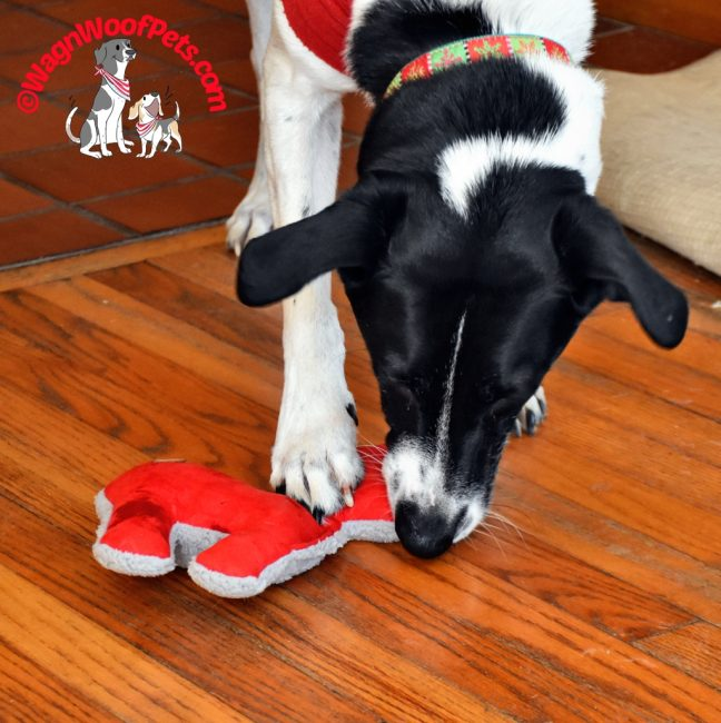 A Few of Our Favorite Things - Holiday Gift Guide for Pets 2018