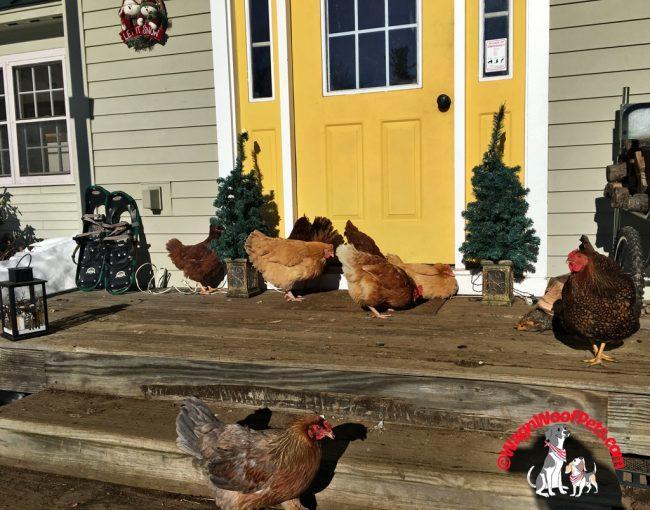 Winter Sunshine on the Farm